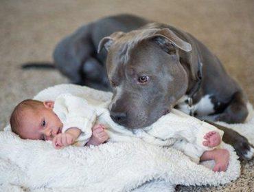 Kedves történet egy félreismert kutyáról