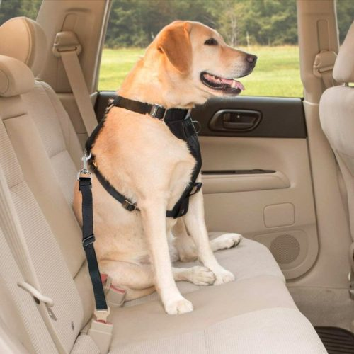 Biztonsági öv autóba, kutyák és macskák számára