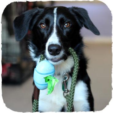 Beco kutyapiszok zacskó tartó -  pórázra rögzíthető