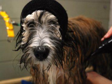 Wash & Vau fülvédő - Happy Hoodie