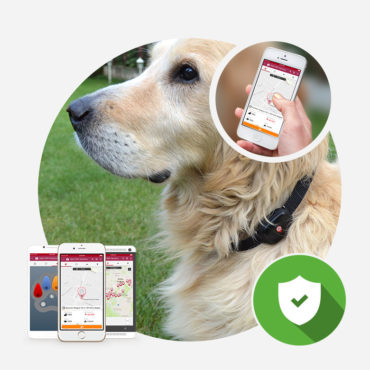 MyKi Pet GPS/GSM nyomkövető
