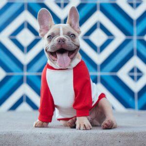 wash & vau önkiszolgáló kutyamosó franchise blog 2